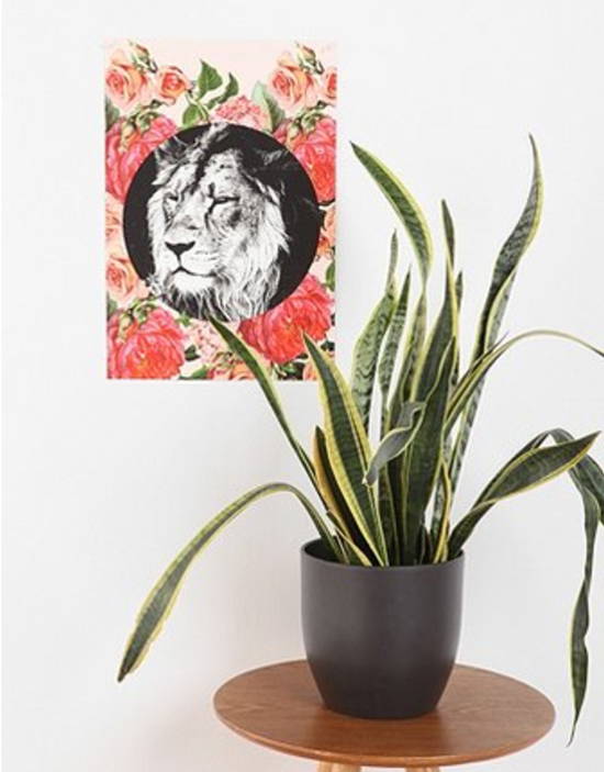 Urban-Outfitters-Lion-Poster