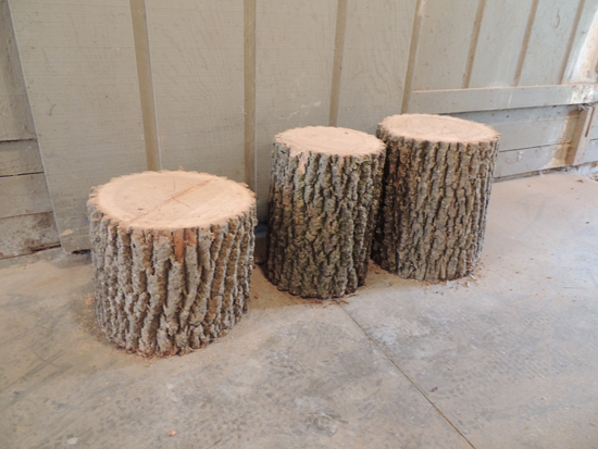 beginning-tree-stumps